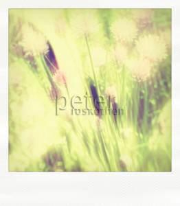 """""""Polar Sommer"""", Fotocollage hinter Acryl 70*80cm - © Fotokunst Peter Roskothen"""