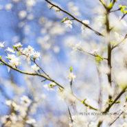 Frühlingsfotos Portraits Fotoschulung