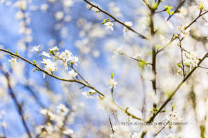 Die Baumblüte - Frühlingsfotos Portraits Fotoschulung