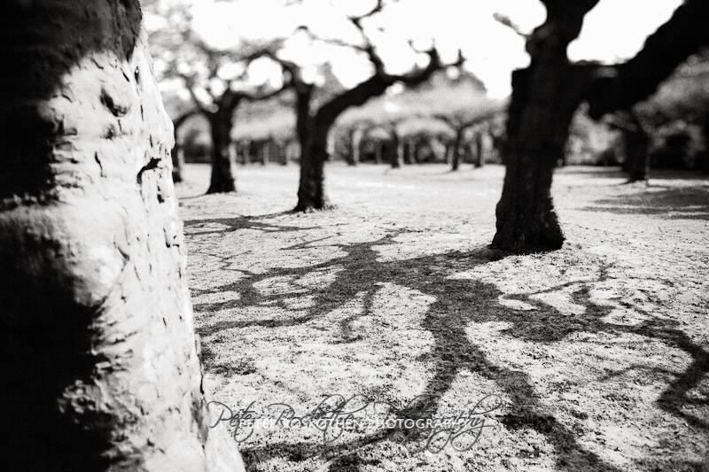 Bäume Fotografie Fotokunst Peter Roskothen Fotograf und Fotokünstler