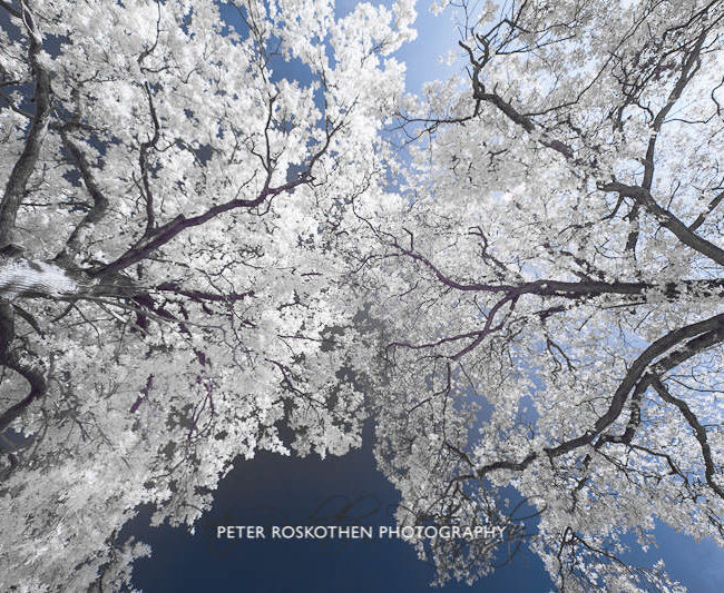 Fotograf Peter Roskothen zeigt freie Arbeiten im Fotoblog