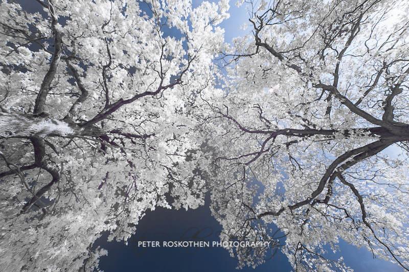 Baumtreffen - Fotokunst von Peter Roskothen Fotograf und Fotokünstler Düsseldorf Niederrhein Ruhrgebiet