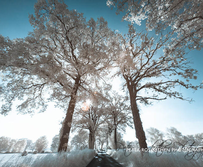 """Der Weg"" Fotografie – Fotograf Peter Roskothen"