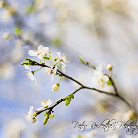 Frühlingsblüte – Fotografie Fotokunst