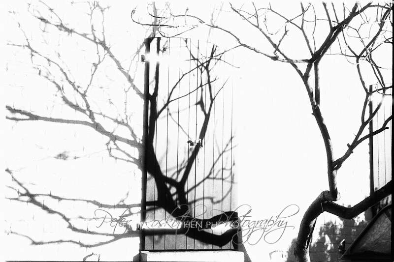 Schatten auf Wand - foto Peter Roskothen Infrarot schwarzweiss Fotografie