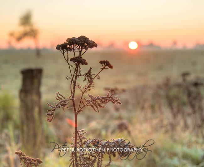Sonnenaufgang Herbst Niederrhein Grefrath