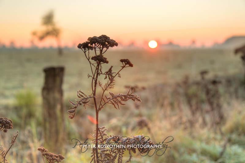 Sonnenaufgang Herbst Niederrhein Grefrath Profifotograf Peter Roskothen