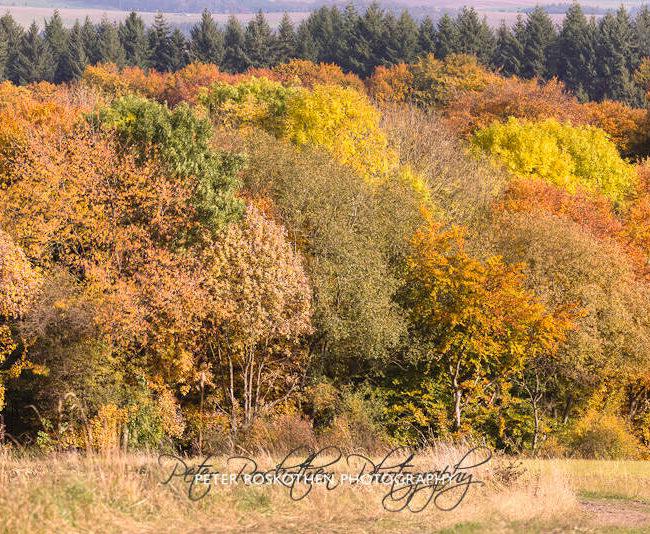 Eifel Herbstfoto