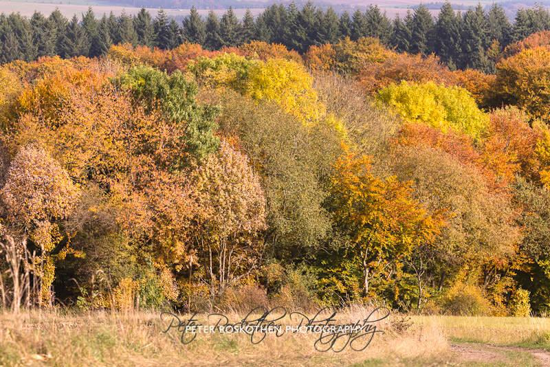 Eifel Herbstfoto Naturfotografie Fotoschulung Fotokurs