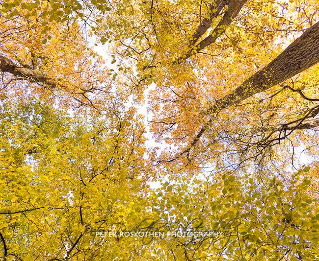 Herbstfotos Grefrath Nettetal