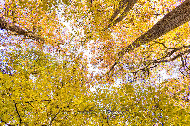 Herbstfotos Grefrath Fotograf Peter Roskothen Naturfotos Fotokurs