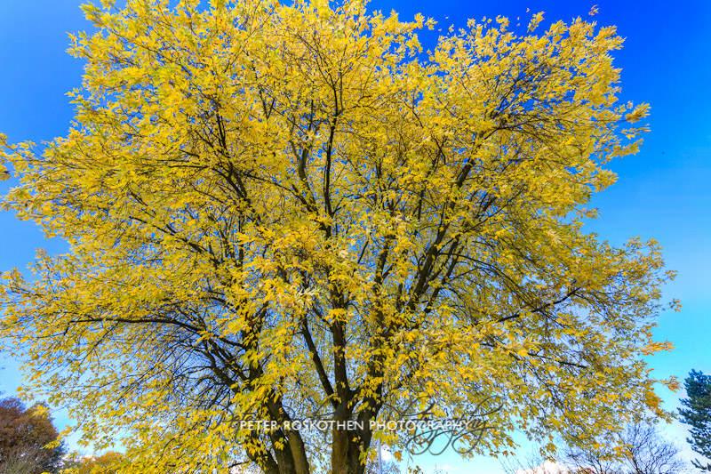 Herbstfotos Fotograf Peter Roskothen