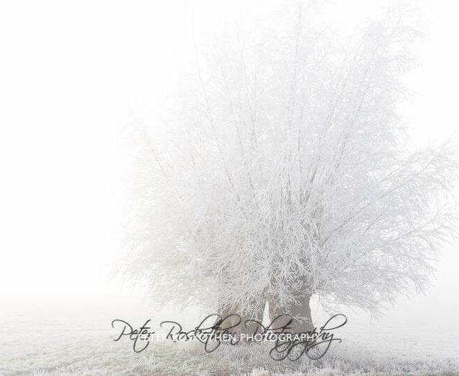 Foto Winter High Key