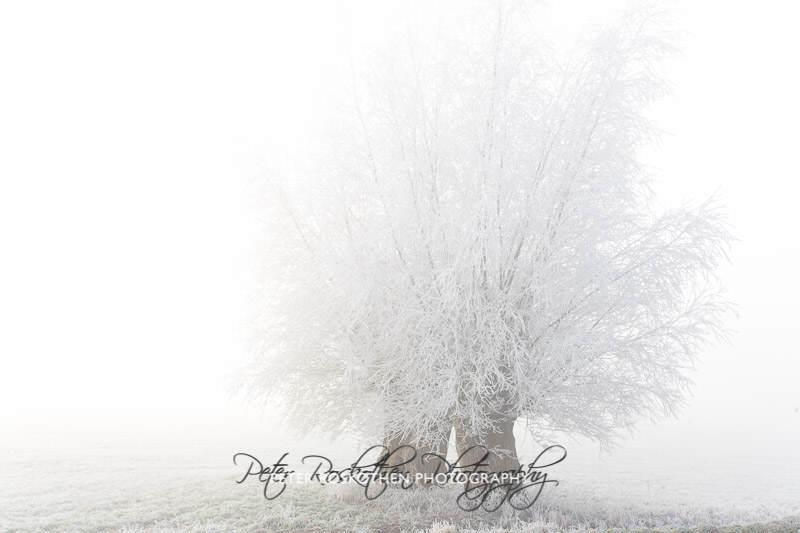 Foto Winter High Key Fotograf Peter Roskothen Fotokunst