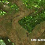 IMG 0425 - Fotoworkshop Naturfotografie Makrofotografie