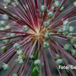 X3D2000 - Fotoworkshop Naturfotografie Makrofotografie