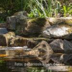 Wasser Naturfoto Fotoexkursion Kasteeltuinen