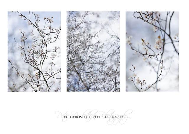 Frühling Baumblüte, Foto Peter Roskothen Fotokunst & Design, www.peterroskothen.de