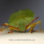 Insekten Makro