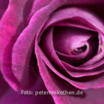 Makrofoto ohne Focus Stacking