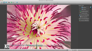 Makrofoto mit Helicon Focus Pro Software für Focus Stacking