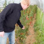 20130909 5097 - Die leckersten Tomaten - Fotoreportage