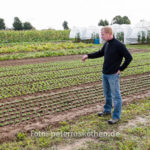 20130909 5117 - Die leckersten Tomaten - Fotoreportage