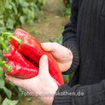 20130909 5287 - Die leckersten Tomaten - Fotoreportage