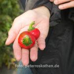20130909 5368 - Die leckersten Tomaten - Fotoreportage