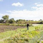 20130909 5373 - Die leckersten Tomaten - Fotoreportage