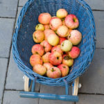 20130909 5425 - Die leckersten Tomaten - Fotoreportage