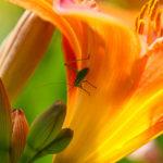 20140621 IMG 5968 - Fotoworkshop Makrofotografie im Botanischen Garten Krefeld