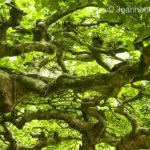 Baum - Fotoworkshop Makrofotografie im Botanischen Garten Krefeld