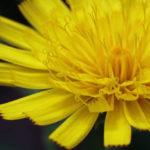 Freya Lieblingsbild 800 72 - Fotoworkshop Makrofotografie im Botanischen Garten Krefeld