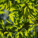 IMG 7497 - Fotoworkshop Makrofotografie im Botanischen Garten Krefeld
