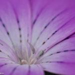 Maike1 - Fotoworkshop Makrofotografie im Botanischen Garten Krefeld