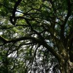 baumfoto - Fotoworkshop Makrofotografie im Botanischen Garten Krefeld