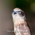 Tierfoto Wildlife Greifvogel