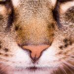 Tierfoto Katze - Katzenfotografie