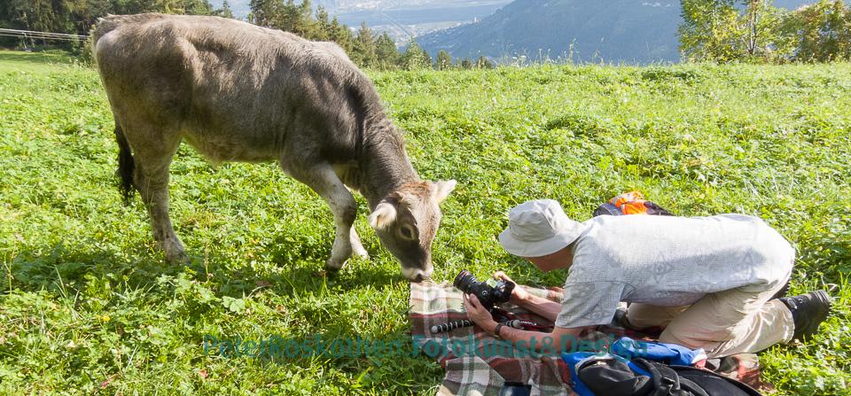 Fotokurs Tierfotografie Tierfotos
