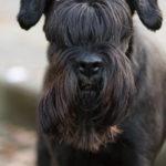 Tierfoto Hund Hundefotografie