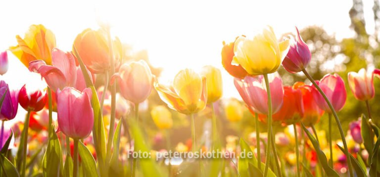 Fotokurs Anfänger Einsteiger, Fotoschulung, Fotoschule Roskothen, Workshop Fotografie