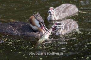 Wildlife Fotoschulung