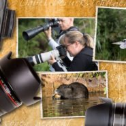 Wildlife Fotokurs