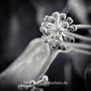 Schwarzweiß Quadratisch – Foto des Tages – Peter Roskothen