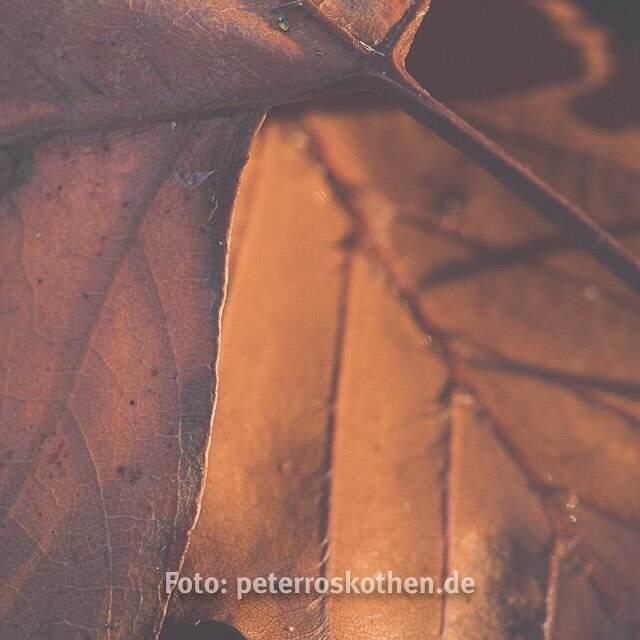 Blätter – Foto des Tages – Peter Roskothen