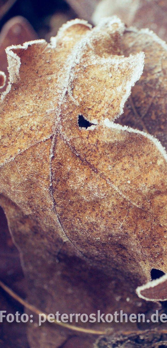 Frost in Grefrath – Foto des Tages
