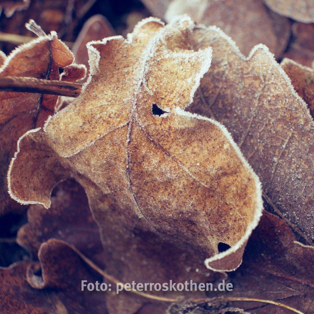 1483639745 - Frost in Grefrath - Foto des Tages