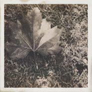 Blatt im Frost – Foto des Tages – Peter Roskothen