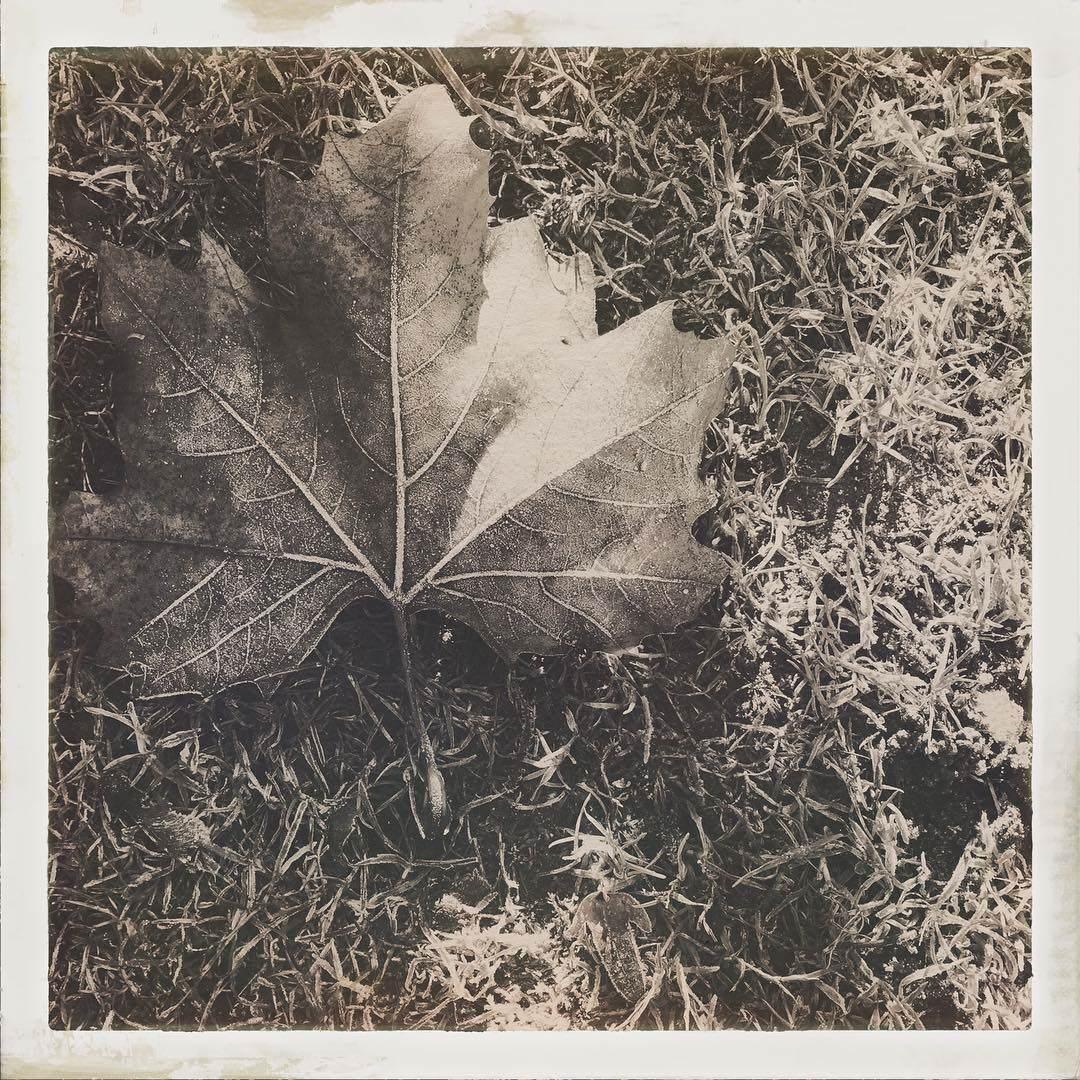 1483719494 - Blatt im Frost - Foto des Tages - Peter Roskothen
